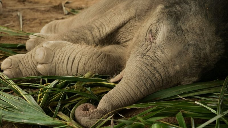 SAMUI ELEPHANT HAVEN NAMED A LITTLE BABY BOY ELEPHANT