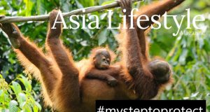 my-step-to-protect-orangutan-alliance-asia-lifestyle