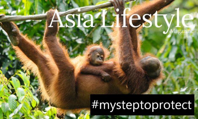 my-step-to-protect-orangutan-alliance-asia-lifestyle